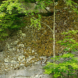 A tree grows in Chesterfield Gorge in Chesterfield, Massachusetts.