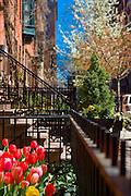 New York City: Spring in Greenwich Village
