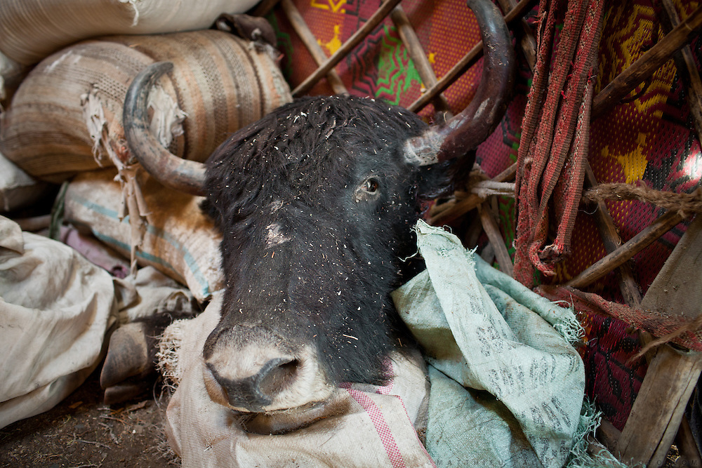 A yak head inside Mullah Bachik's house. The animal died of an unknown sickness. When a yak dies or is killed in summer, it is eaten quickly so the meat doesn't perish. Andemin camp.