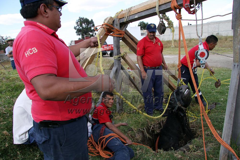 ZINACANTEPEC, Mexico.- Bomberos y personal de proteccion civil municipal no lograron rescatar con vida a una vaca que cayo a un pozo de unos 8 metros de profundidad, la tarde este martes en la comunidad de la Cienega en San Antonio Buenavista. Agencia MVT / Jose Hernandez. (DIGITAL)