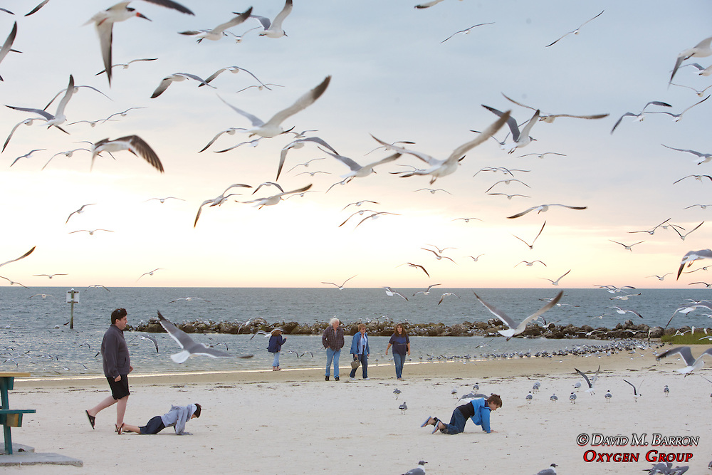 Boys Running After Laughing Gulls