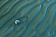 Oceania; New Zealand; Aotearoa; South Island; Golden Bay, Tanaka, Abel Tasman, National Park, clam on beach
