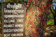 """30 JANUARY 2013 - CHEOUNG EK, CAMBODIA: The so called """"Killing Tree"""" in the Choeung Ek Killing Fields. The bracelets, a Buddhist tradition, are left at the tree by tourists and Cambodian visitors to the Killing Fields. Choeung Ek is a former orchard and Chinese cemetery about 17 km south of Phnom Penh, Cambodia. It is the best-known of the """"Killing Fields"""", where the Khmer Rouge regime executed over one million people between 1975 and 1979. Mass graves containing 8,895 bodies were discovered at Choeung Ek after the fall of the Khmer Rouge regime. Many of the dead were former political prisoners who were kept by the Khmer Rouge in their Tuol Sleng detention center, a former high school in Phnom Penh.      PHOTO BY JACK KURTZ"""