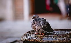 THEMENBILD - eine Taube in einem Brunnen, aufgenommen am 05. Oktober 2019 in Venedig, Italien // a dove in a well, in Venice, Italy on 2019/10/05. EXPA Pictures © 2019, PhotoCredit: EXPA/Stefanie Oberhauser