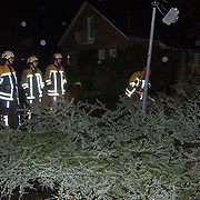 Zuidwesterstorm heeft boom omgewaaid Zwarte Bergweg Huizen