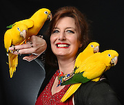 """Photo by Mara Lavitt -- Special to the Hartford Courant<br /> March 21, 2015, Middletown<br /> The eighth FeatherFest was held in Middletown by the Connecticut Parrot Society providing visitors with education about parrots and other birds. Concetta Ferragamo of Binghamton, NY, the northeast regional director of the American Federation of Aviculture, brought Queen of Bavaria Conures, an endangered species from Brazil and Central America. Ferragamo says, """"I'm passionate about aviculture, keeping the species, all of them, alive. The CITES and endangered species lists are growing every year. Unless we take them in as an avid aviculturalist, there will be no more."""""""