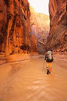 A lone backpacker hikes through the Paria Canyon in the Paria-Vermillion Cliffs Wilderness area, Arizona.