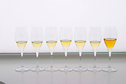 Analytical wine tasting in a neutral white environment a white desk a backlit white screen with a line of champagne glasses filled with wine showing how the colour changes with age from young yellow yellowish green greenish to old golden amber in champagne at the Maison de la Champagne (the House of the Champagne Region), the head quarters of CIVC (Comite Interprofessionnel du Vin de Champagne) in Epernay, Champagne, Marne, Ardennes, France