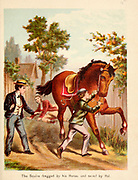 The Squire Dragged by his Horse From the Book '  Sandford and Merton : in words of one syllable ' by Thomas Day, Mary Godolphin and Lucy Aikin, Published in New York by McLoughlin Brother's, Publishers