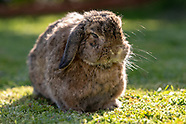 Dilly the rabbit