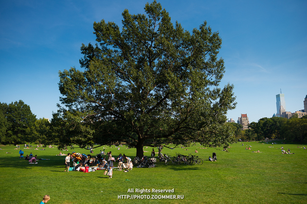 Family with kids picnic under the big tree on Central park Sheep meadow, New York