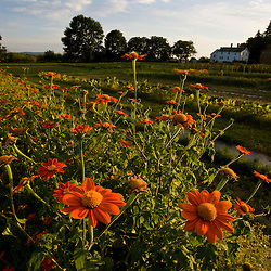 The gardens at the Canterbury Shaker Village in Canterbury, New Hampshire.