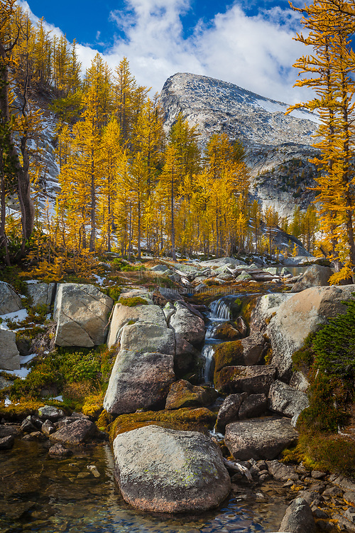 Larch trees, or tamaracks, in the Enchantment Lakes area of the Alpine Lakes Wilderness, Washington with the peak of Little Annapurna in the background