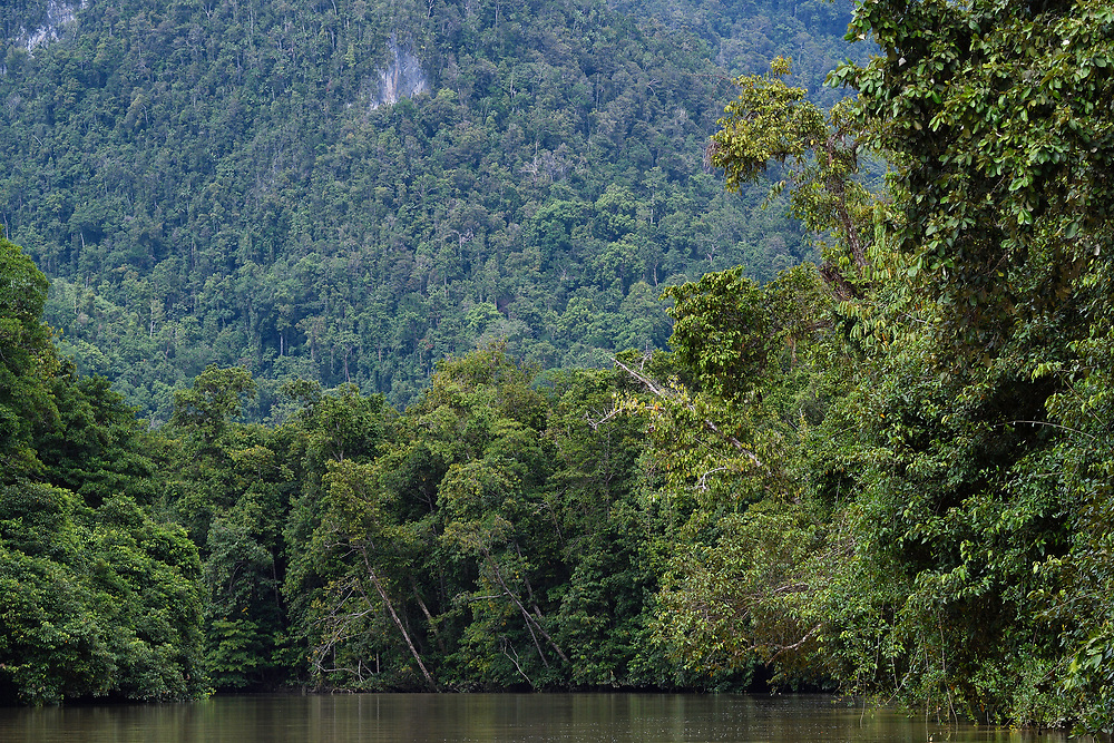 """Up the Lenguru rainforest iver, near Lobo village, Triton Bay, mainland New Guinea, Western Papua, Indonesian controlled New Guinea, on the Science et Images """"Expedition Papua, in the footsteps of Wallace"""", by Iris Foundation"""