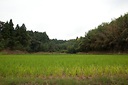 Rice paddy surrounded by forest in rual Japan.