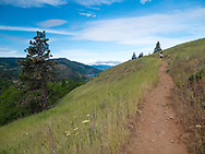 The Mosier Plateau located in the Columbia River Gorge has a beautiful wildflower display with views of the Columbia River in the state of Oregon.