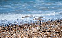 Brighton beach almost empty  as Boris Johnson  covid 19 lockdown rules are relaxed Photo Brian Jordan