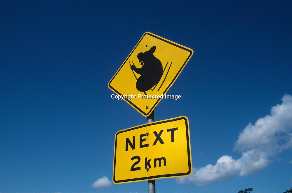 koala bear originates from australia