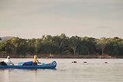 People in canoe paddling on river, observing hippopotamus, Zambezi River, Zambia