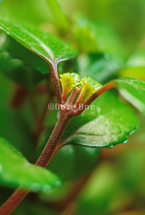 Close up of a plant bud