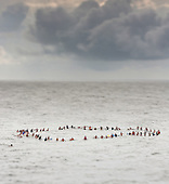 Surfer Paddle Out