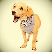 Adorable blonde shelter dog awaits new home