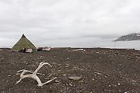 Antler from Svalbard raindeer outside the camp