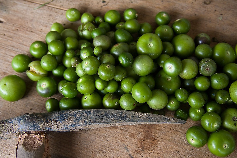 Green tomatillos (Physalis philadelphica), a variety of tomato used in many Latin American salsas, are piled on a wooden table at a home in Santa Catarina Lachatao, part of the Pueblos Mancomunados, a network of Zapotec villages in the Sierra Norte Mountains of Oaxaca state, Mexico.
