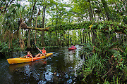 Kayakers on the Loxahatchee River in Jupiter, Florida, United States, a nearly 8-mile river that flows into the Atlantic Ocean and was designated a National Wild & Scenic River in May 17, 1985.