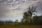 A layer of altocumulus clouds are partially visible through the fog that covers the Beaver Marsh in Cuyahoga Valley National Park, Ohio.