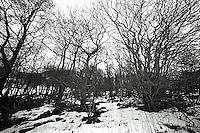 Skog på Leitaneset.<br /> Foto: Svein Ove Ekornesvåg