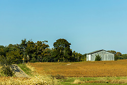Barn in south central McLean County.  This one a machine shed type and is the only building left on this once thriving homestead.