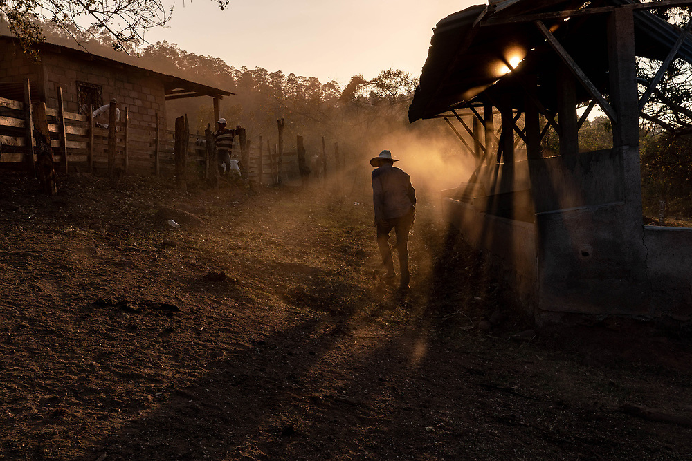 """Jose Enamorado, walks through the dust on """"La haciendita"""" farm after vaccinating cows for their biannual deworming injections on March 13, 2019, in Veracruz, Honduras. Deworming and other preventive medical efforts for the cows is an important factor for keeping them healthy in a climate where sanitation is not the best."""