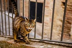 Cat Walking on Brick Wall