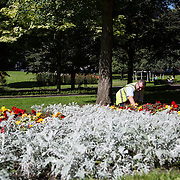 16.08.2016    <br /> Limerick City and County Council, Flowers, Limerick City. Tommy Brinn, LCCC tends to flower beds at the Peoles Park, Limerick. Picture: Alan Place