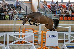 046, Neelaba VDL<br /> KWPN Kampioenschappen 2021<br /> Ermelo <br /> © Hippo Foto - Dirk Caremans<br /> 13/08/2021