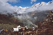 Sherpas, trekkers and yaks leaving Dzongri
