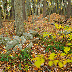 An old stone wall n the forest at Elmwood Farm in Hopkinton, Massachusetts.