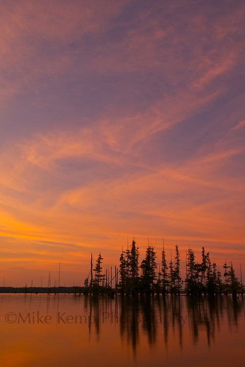 A group of cypress trees stand against a colorful sky at sunset over Lake Conway near Mayflower, AR