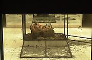 Alexander McQueen Spring/summer 2001. Gatcliff Rd Warehouse. London. 26 September 2000. © Copyright Photograph by Dafydd Jones 66 Stockwell Park Rd. London SW9 0DA Tel 020 7733 0108 www.dafjones.com