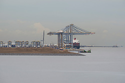 © Licensed to London News Pictures. 07/08/2013. Coryton, Essex, UK. London Gateway DP World, the UK's newest container port opened for business when the first shipment of goods arrived. The cargo of fruit arrived from South Africa aborad the MOL Caledon. The 58,000tonne vessel arrived during the night and is expected to leave the port again later today. Photo credit : Simon Ford/LNP