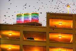 Birds and neon-lit storgage tanks in the West End, Dallas, Texas, USA.