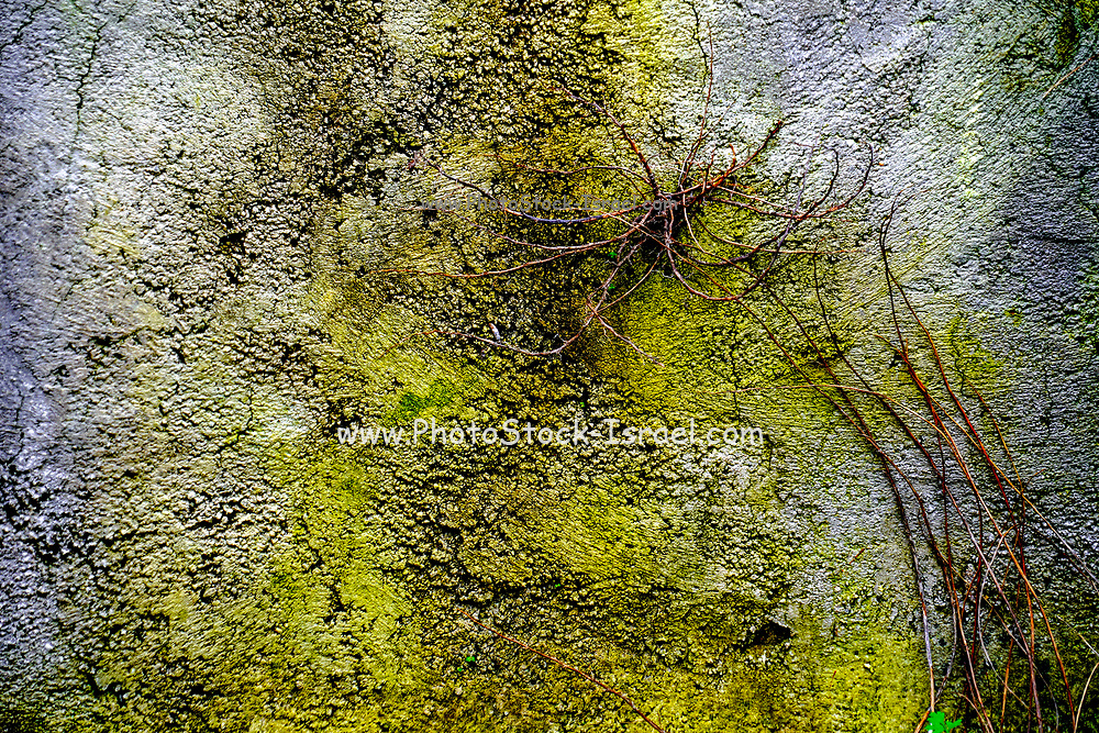 Yellow green mossy Abstract background