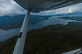 wide tongass