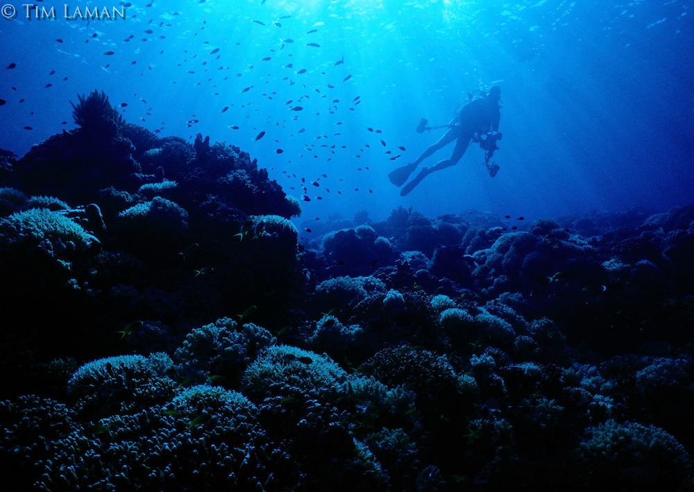 A diver explores the pristine Apo Reef, Philippines