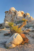 Granite rocks and Mohave Yucca <br /> (Yucca schidigera) Joshua Tree National Park California