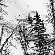 Natalie Segal makes some early morning powder turns on Teton Pass near Jackson, Wyoming.