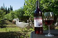 Haskap wine from Alaska Berries, Soldotna, Alaska, USA<br /> <br /> Photographer: Christina Sjögren<br /> <br /> Copyright 2019, All Rights Reserved