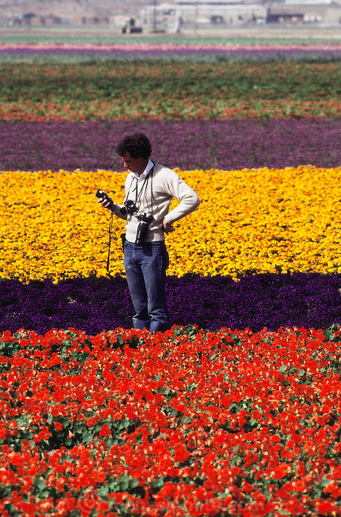 Photographer Peter Menzel taking a meter reading of the light in the middle of fields of flowers. In Lompoc, California.
