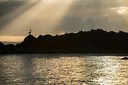 Brown Pelican Silhouette (Pelecanus occidentalis urinator)<br /> Bachas Beach<br /> Santa Cruz<br /> Galapagos<br /> Ecuador,  South America